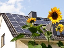 solar_panels_sunflower