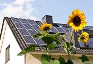 solar_panels_sunflower