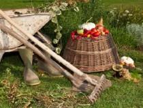 Fall_gardening