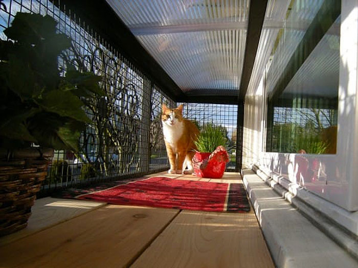 Catio Spaces A Patio For Your Cat Rismedia S Housecall