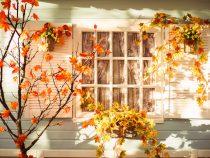 Evening patio in the autumn season.