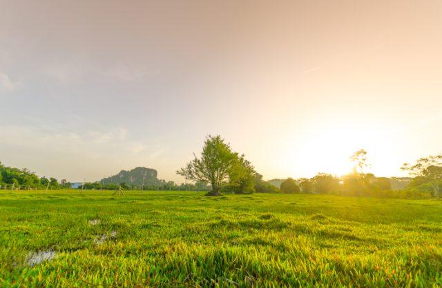 Golden meadow in summer