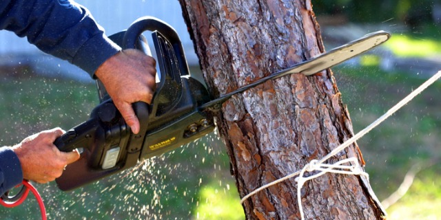 set-of-hands-using-a-chainsaw-on-a-tree-trunk-picture-id139544191