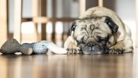 pets smart home